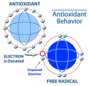 antioxidant behavior